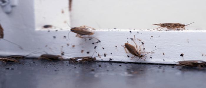 Professional Cockroach Extermination Services